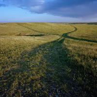 photo of a grassy field