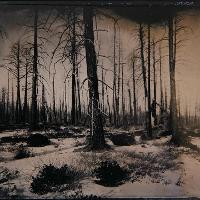 photo of woods in the winter