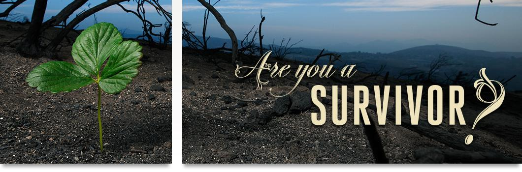 "Burned forest area with a lone seedling growing in the charred soil. ""Are you a Survivor?"""