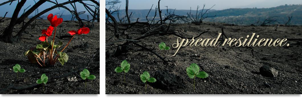 """Burned forest area with tiny seedlings growing  and blooming in the charred soil. """"Spread resilience."""""""