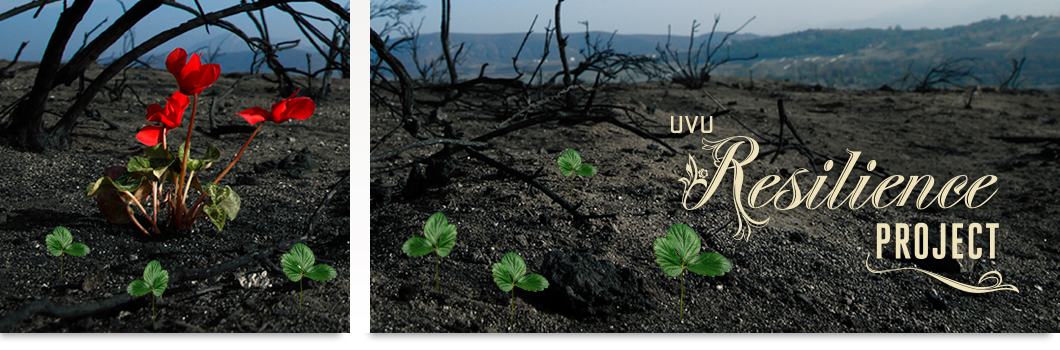 "Burned forest area with tiny seedlings growing  and blooming in the charred soil. ""UVU resilience project."""