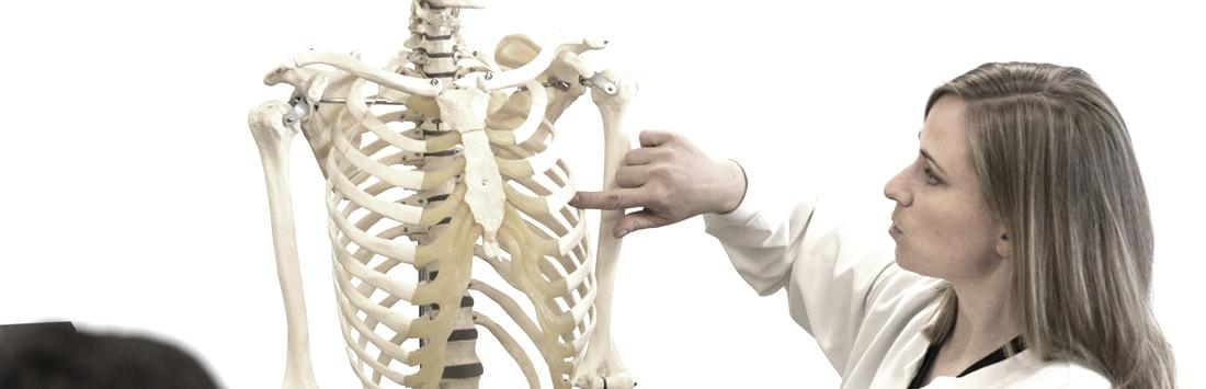 Faculty teaching anatomy
