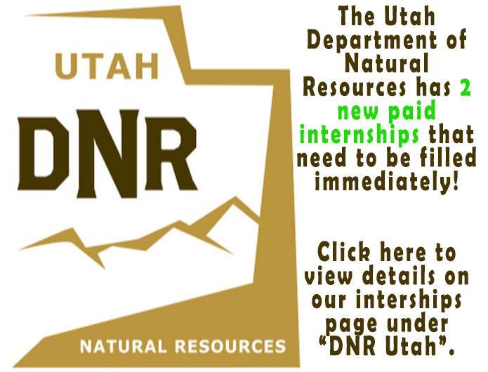 DNR internships